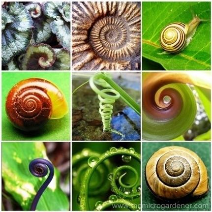 15 Benefits of a Herb Spiral in your Garden | | Vertical garden | Scoop.it