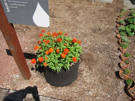 Smart Pots | School Gardening Resources | Scoop.it