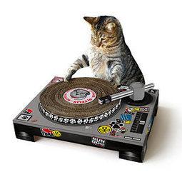 Cat Scratch DJ | Cats and Music | Scoop.it