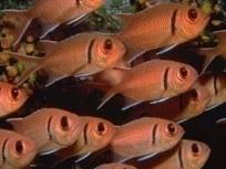 les objectifs d'un petit poisson parmi d'autres… | Pédagogie Numérique | ITyPA2 | Scoop.it