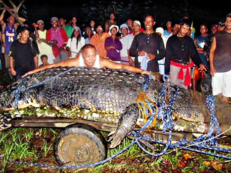 Philippines : le plus grand crocodile au monde est mort | Asie Info | Merveilles - Marvels | Scoop.it