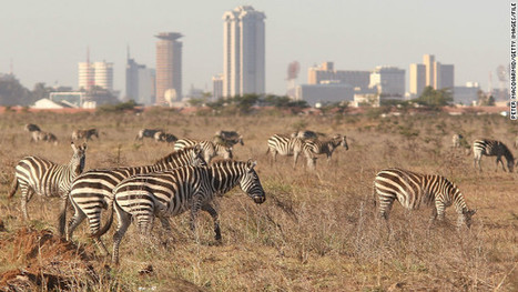 'Wall of trees' to protect Nairobi wildlife - CNN International | My Funny Africa.. Bushwhacker anecdotes | Scoop.it