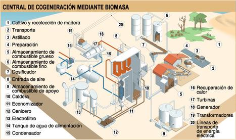 Funcionamiento de una central de biomasa | Planeta Neutro | Medio ambiente y energia | Scoop.it