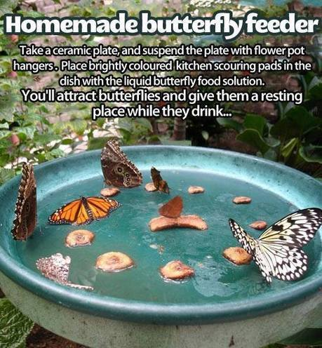 101 Gardening: Homemade butterfly feeder | Backyard Gardening | Scoop.it