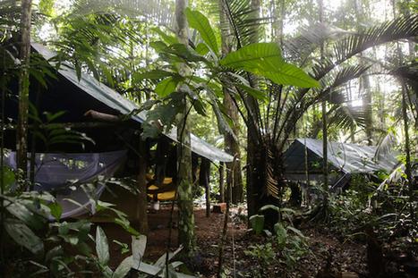 À la découverte de l'Amazonie ! - L'actualité à hauteur d'enfants ! | The Blog's Revue by OlivierSC | Scoop.it