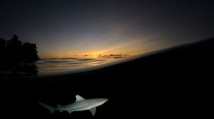 Cruising sharks, fiery dragons and invisible dust   Gaia Diary   Scoop.it