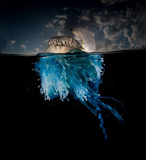 A Parallel Universe: My Half-Underwater Pics Show What Hides Beneath The Waves | Environment and Biodiversity | Scoop.it