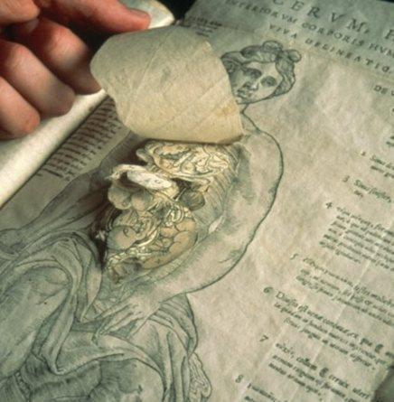 Más de 100.000 imágenes de la historia de la medicina con licencia Creative Commons | Bioética | Scoop.it