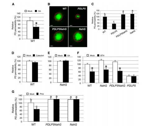 Salicylic Acid Regulates Plasmodesmata Closure during Innate Immune Responses in Arabidopsis | mpmi | Scoop.it