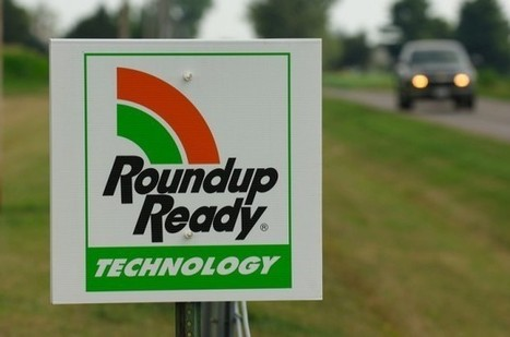 Some farmers want more scrutiny of new Monsanto crops : Business   Food issues   Scoop.it