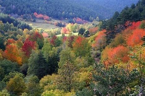 Ecodiari: Cal mantenir la superfície agrícola per preservar els espais forestals   Sociedad 3.0   Scoop.it