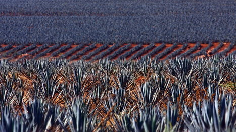 Tequila Nation: Mexico Reckons With Its Complicated Spirit | @FoodMeditations Time | Scoop.it