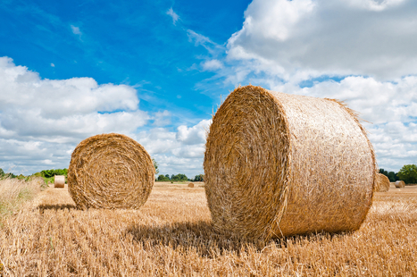 Cowboys and Ranchers Stealing Bales of Hay -- Climate Change Ushers in New Kind of Crime Wave | Local Food Systems | Scoop.it