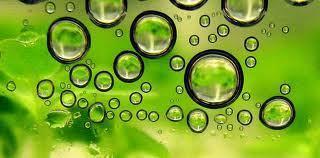 Production de biocarburants à partir d'algues marines   Alimentation et Santé, Trust on Science !   Scoop.it