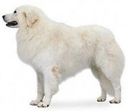 Top 10 Best Guard Dog Breeds | Breeds and Such | Scoop.it