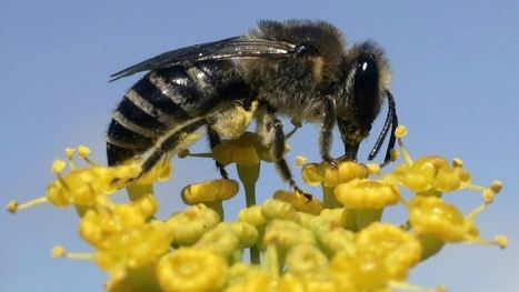 The world is finally trying to save the bees | HLD's Miscellaneous... | Scoop.it