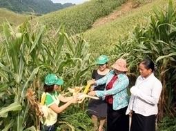 Développer la culture des plantes OGM au Vietnam | Questions de développement ... | Scoop.it