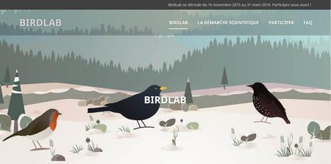 BIRDLAB | La première expérience de sciences participatives sur smartphone | Musical coding | Scoop.it