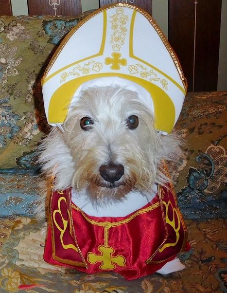 Wordless Wednesday | West Highland White Terrier | Scoop.it