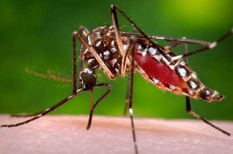 Researchers havediscovered two ways a compound blocks dengue virus | Virology News | Scoop.it