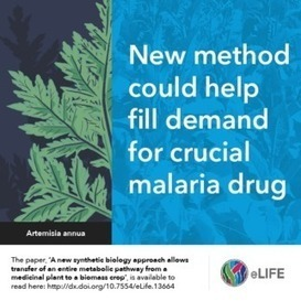 New plant engineering method could help fill demand for crucial malaria drug - Max Planck (2016)  | Ag Biotech News | Scoop.it