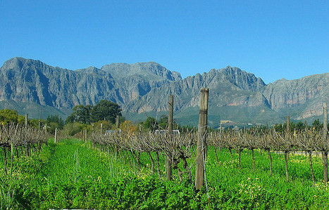 Spotlight: The Paarl Wine Region of South Africa | Wine Life Today | Wine in the World | Scoop.it