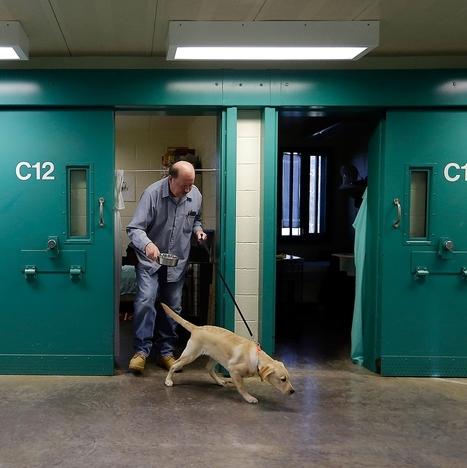 Pups in prison | up2-21 | Scoop.it