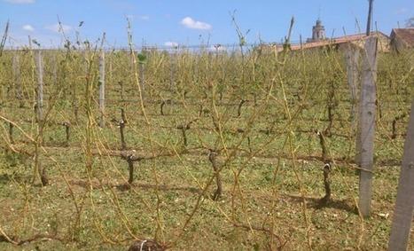 Des vignobles de l'Entre-deux-mers ravagés par l'orage | Oenotourisme en Entre-deux-Mers | Scoop.it