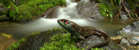 Peru's Manu National Park sets new biodiversity record | Style | Scoop.it