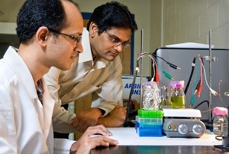 University of Georgia stops plant photosynthesis to generate solar power | Where (Neuro)Science and Future Technologies Meet | Scoop.it