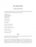 Clasificacion Botanica AGUACATE | Aguacate: Persea  americana | Scoop.it