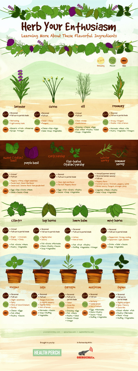 Herb Your Enthusiam - Growing Your Own Herbs, Their Flavors and Uses - Nest Full of New | Gardens and Gardening | Scoop.it