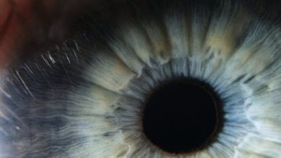 'Human corneas re-grown in mice' | The future of medicine and health | Scoop.it