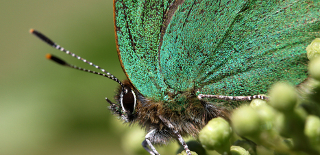 L'effet papillon : la nanotechnologie optique prend son envol [en anglais] | EntomoNews | Scoop.it