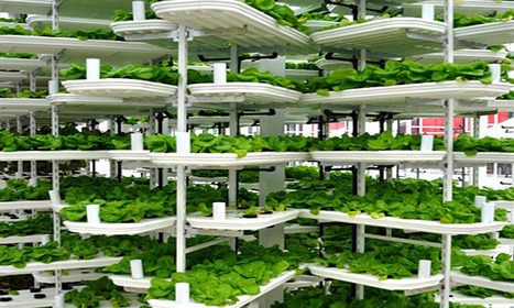 Vertical farming explained: how cities could be food producers of the future | ecotourisnovation | Scoop.it