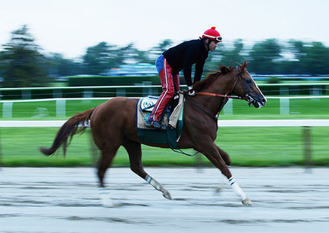 California Chrome and the Triple Crown Fix | Horse Racing News | Scoop.it