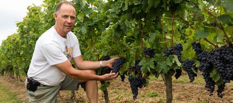 Côtes de Bordeaux : et un de plus !   Le vin quotidien   Scoop.it