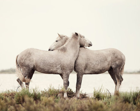 12 Enchanting Pictures of Camargue Horses by Irene Suchocki | Equestrian Vacations | Scoop.it