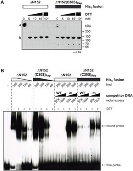 Refined Requirements for Protein Regions Important for Activity of the TALE AvrBs3 - PLOS One | Effectors and Plant Immunity | Scoop.it