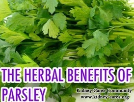 Is Parsley Good For Stage 5 Chronic Kidney Failure_Kidney Cares Community | chinesemedicinekidney | Scoop.it