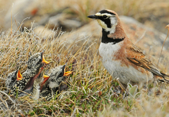 New Study Finds Pesticides Leading Cause of Grassland Bird Declines « NEW PHOENIX | Farming, Forests, Water, Fishing and Environment | Scoop.it