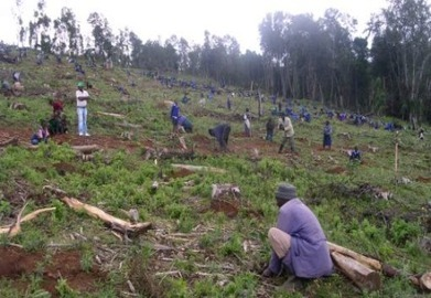 As rains change, Kenyans turn to planting indigenous trees | Agricultural Biodiversity | Scoop.it
