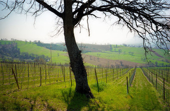 One Word to Sommeliers (and Chefs): Travel - On the Wine Trail in Italy | Vin 2.0 | Scoop.it