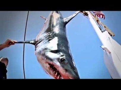 NBC Shark Hunters Cancelled! | All about water, the oceans, environmental issues | Scoop.it
