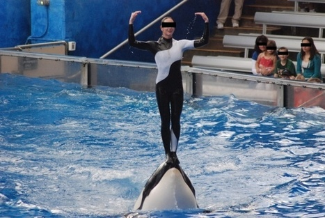 A movie went behind the scenes, and now SeaWorld is just trying to stay afloat.   All about water, the oceans, environmental issues   Scoop.it