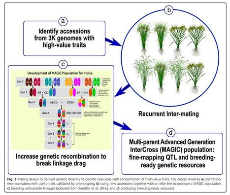 Allele mining and enhanced genetic recombination for rice breeding | Rice Blast | Scoop.it