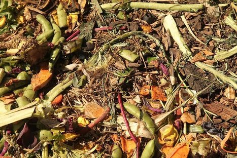Should You Compost? | JSTOR Daily | Erba Volant - Applied Plant Science | Scoop.it