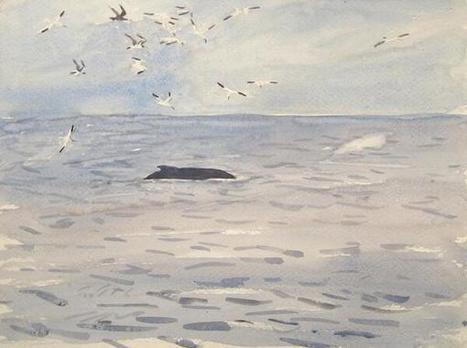 Twitter / JamesRMcCallum1: Humpback sketch, Waxham, Norfolk. ... | Birding Britain & Ireland | Scoop.it