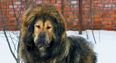 You Might Be Surprised What These 10 Dog Breeds Were Originally Bred For | Dog Lovers | Scoop.it