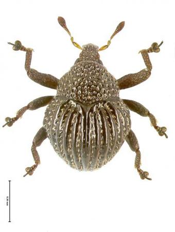 Les plus grandes découvertes de nouvelles espèces en 2013 (1/2)   EntomoNews   Scoop.it